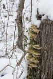 Грибок в снеге стоковое фото rf