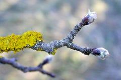 Грибок дерева на старой яблоне стоковые фото
