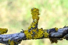 Грибок дерева на старой яблоне стоковое изображение rf