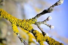 Грибок дерева на старой яблоне стоковые фотографии rf