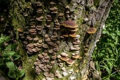 Грибок дерева Стоковые Фотографии RF