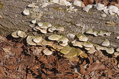 Грибок дерева в лесе Стоковые Изображения
