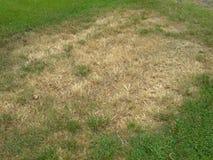 Грибок заплаты Брайна в лужайке Стоковое Фото