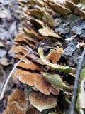 Грибок и кора дерева стоковое фото