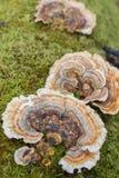Грибок и мох на дереве Стоковое Фото
