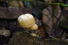 Грибок на атлантическом поле тропического леса Стоковые Фотографии RF