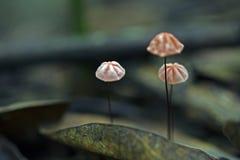 Грибок на атлантическом поле тропического леса Стоковое фото RF