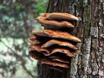 Грибок на дереве стоковое фото rf