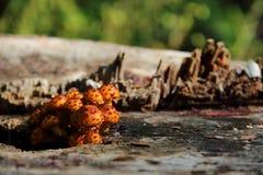 Грибок на пне дерева стоковое фото