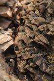 грибок на stub Стоковые Фото