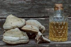 Грибок полки Тинктура грибка кронштейна Naturopathy Стоковое Фото