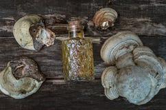 Грибок полки Тинктура грибка кронштейна Naturopathy Стоковые Изображения