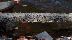 Грибок растя на упаденном стволе дерева на парке штата Hacklebarney парк штата Нью-Джерси стоковые изображения rf