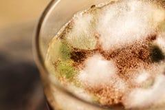 Грибок споры сформировал на поверхности чая Стоковое Фото