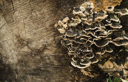 Грибок тимберса стоковая фотография rf