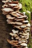 грибок Стоковое Фото