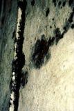 грибок Стоковая Фотография