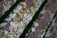 грибок Стоковая Фотография RF