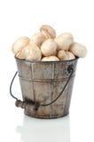 грибы ведра Стоковая Фотография