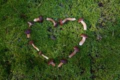 Грибы вырезывания в лесе Стоковое Изображение RF