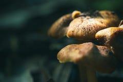 Грибы в глубоком тропическом лесе Стоковая Фотография RF