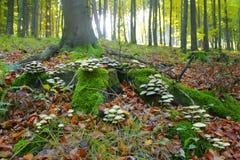 Грибы в лесе Стоковое Изображение RF