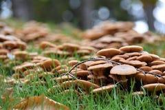 Грибы в лесе, Дублине Стоковая Фотография