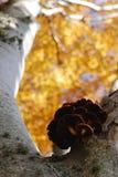 Грибы в осени стоковая фотография rf