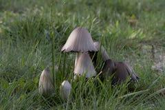 Грибы в одичалом лесе Стоковая Фотография RF