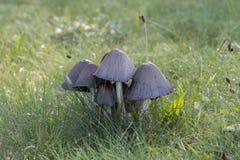 Грибы в одичалом лесе Стоковое Изображение