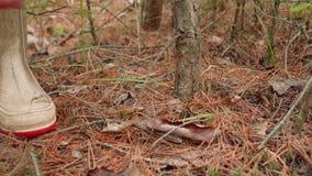 Грибы в подборщике гриба леса собирают гриб в лесе осени сток-видео