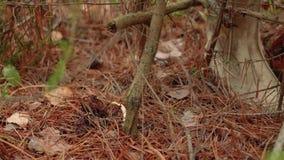 Грибы в подборщике гриба леса собирают гриб в лесе осени акции видеоматериалы