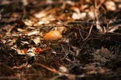 Грибы в природе с малой глубиной поля Стоковое Фото