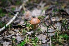Грибы в природе с малой глубиной поля Стоковое фото RF