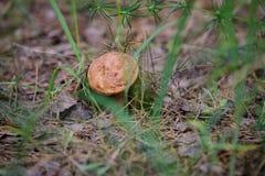 Грибы в природе с малой глубиной поля Стоковые Фото