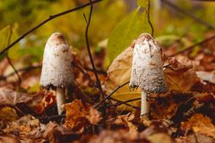 Грибы в расчистке в лесе гриба осени Стоковая Фотография RF