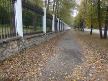 Грибы в траве осени Стоковая Фотография