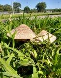 Грибы в траве Стоковые Фото