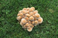 грибы группы Стоковые Фотографии RF