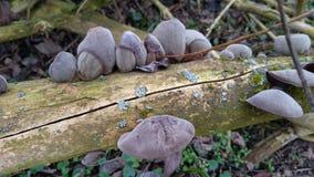 Грибы дерева Стоковая Фотография RF