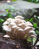 Грибы леса стоковое фото rf