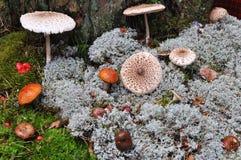 Грибы леса Стоковая Фотография