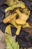 Грибы и листья осени Стоковая Фотография RF