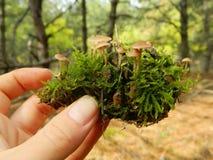 Грибы и мох на конусе сосны Стоковая Фотография RF