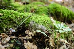 Грибы и мох Стоковое Изображение