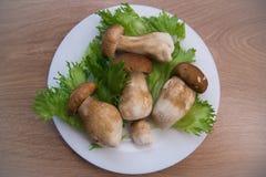 Грибы и салат Стоковые Фотографии RF