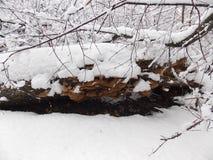 грибы идут снег вниз Стоковое Изображение