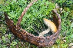 Грибы и черника в плетеной корзине стоковое фото rf