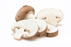 грибы каштана Стоковые Изображения