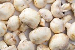 грибы кнопки стоковое фото rf